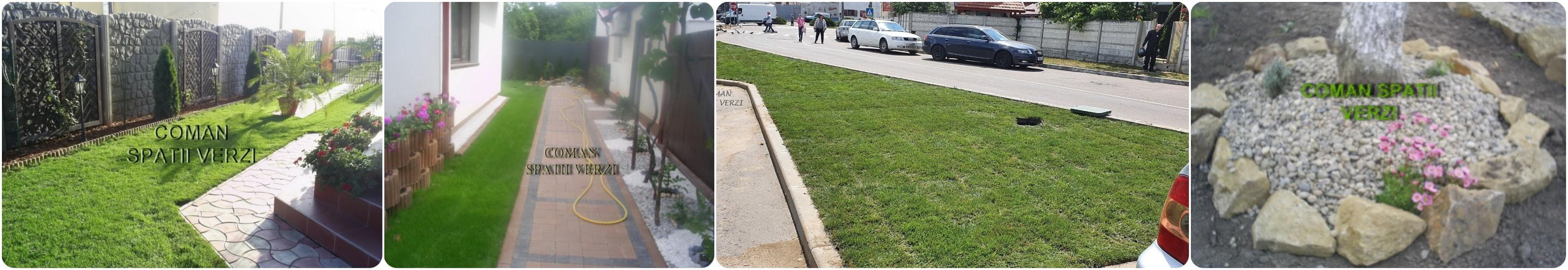 gazon alei piatra plante gradina timisoara