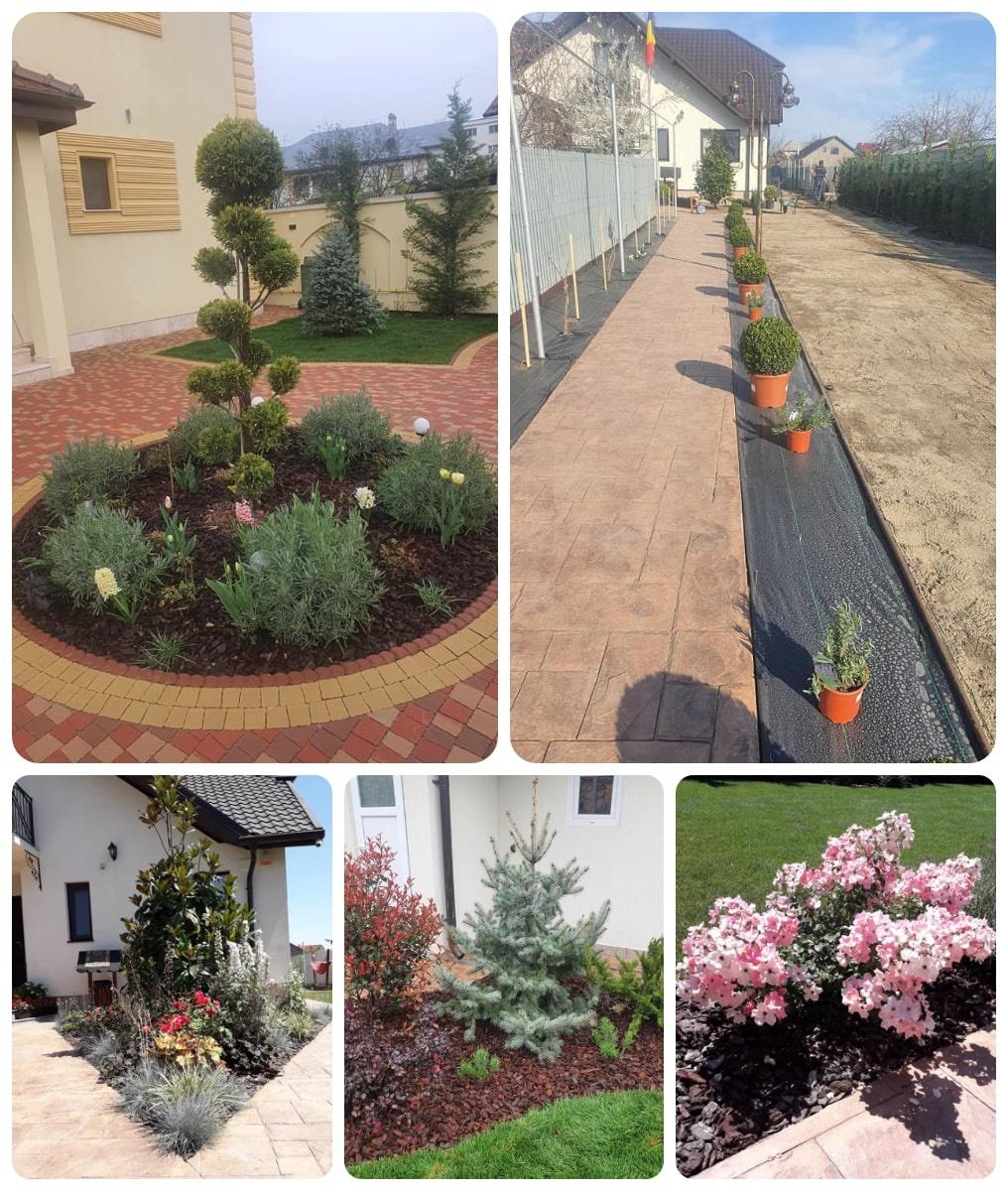 plante_decorative_gradina_buzau_1200